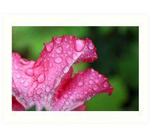 Wet Pink Petunia Art Print
