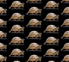 Marching Baby Tortoise Cartoon Vector Isolated by taiche