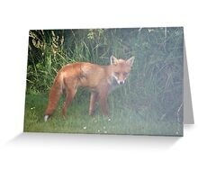 Fox in the Mist Greeting Card
