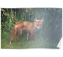 Fox in the Mist Poster
