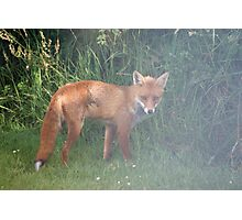 Fox in the Mist Photographic Print