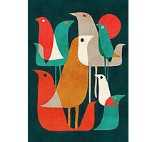 Flock of birds Photographic Print