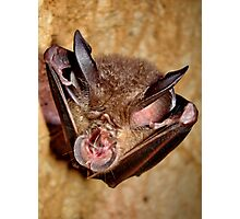 Wrinkle-lipped bat Photographic Print