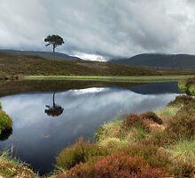 Lochan agus craobh by Ranald