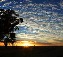 Bush Tank - Cunderdin - Western Australia by Paul Fulwood