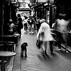 Dog In Melbourne by Andrew  Makowiecki