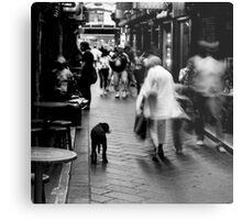 Dog In Melbourne Metal Print