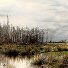 Manning Drive Panorama  by Matthew Jones