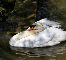 Mute Swan Resting In The Shadows by Susie Peek