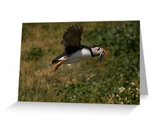 Puffin in flight Greeting Card