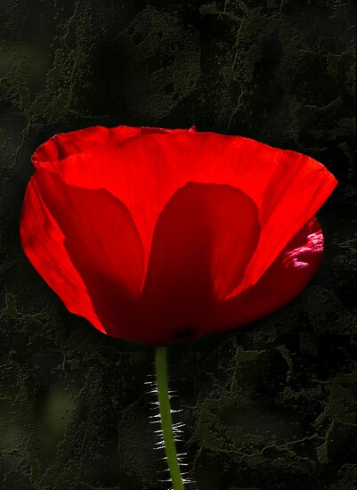 The Poppy by Svetlana Sewell