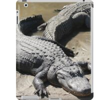 Cool Alligator
