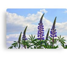 Leaning Lupins Canvas Print