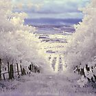Vines by Andrew Dickman