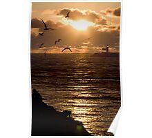 Sun Gulls - Fremantle Port - Western Australia Poster