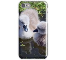 Newly Hatched Cygnets At Abbotsbury iPhone Case/Skin