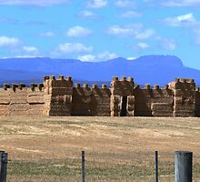 Grass castle, near Campbelltown, Tasmania by mark7b