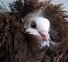Tucked up in my  Feathers by JuliaWright