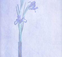 Feeling Blue by Kim Roper