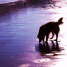 saz silhouette on the sands by xxnatbxx