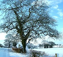 Wintery Tree by TREVOR34