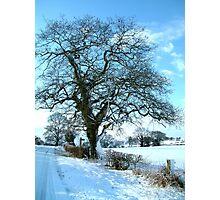 Wintery Tree Photographic Print