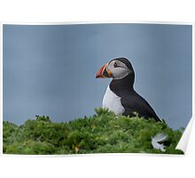 Patient Puffin Poster