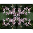 Orchid Quadro 0001 • Singapore Botanical Gardens by PETER CULLEY