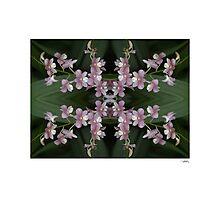 Orchid Quadro 0001 • Singapore Botanical Gardens Photographic Print