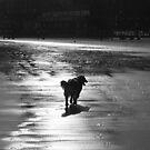 black and white silhouette by xxnatbxx