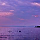 ducks on lake garda by xxnatbxx