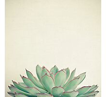 Echeveria Photographic Print
