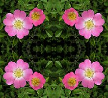 Dog Rose Dilema by justlinda