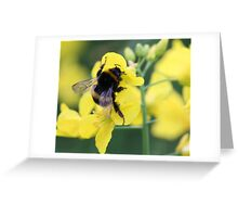 Busy Pollinating Greeting Card