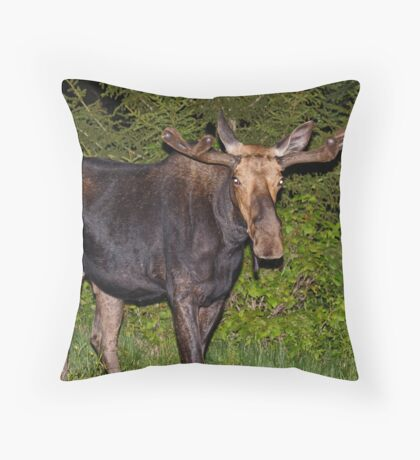 Nightwalker: Bull Moose Throw Pillow
