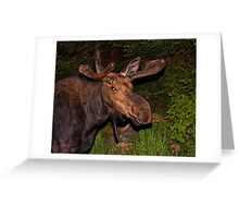 Eyes of the Night: Bull Moose Greeting Card