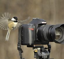 Bird Photographer by gregsmith