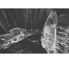 00600012 Photographic Print