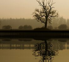 tree by dutchlandscape