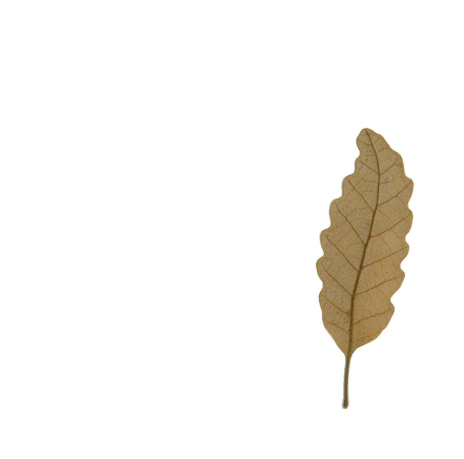 the perfect leaf by dianegreenwood