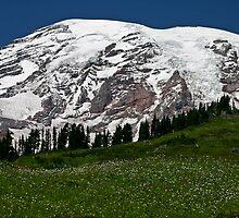 Mt. Rainier at Paradise by Barb White