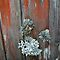 Lichen and or Moulds on Fences or other man-made timber structures..