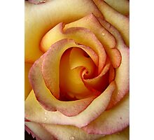 Sunny Hill Rose Photographic Print