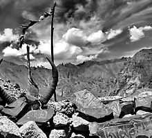 high pass. ladakh, jammu kashmir, india by tim buckley | bodhiimages