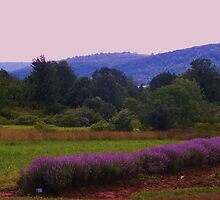 Lavender Colors in Art  and Photos by schiabor