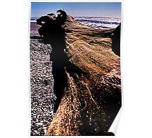 driftwood. westcoast, aotearoa Poster