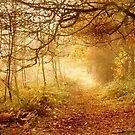Autumn Woodland by Samantha Higgs