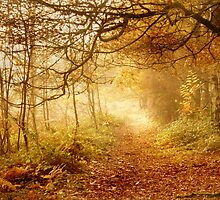 Autumn Woodland by Samantha Higgs