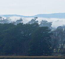 Misty Morning - Tamar Valley, Tasmania by Ruth Durose