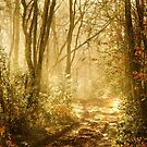 Light To My Path by Samantha Higgs